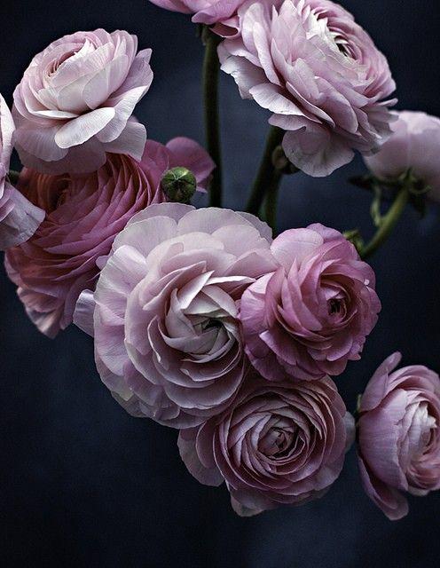The Painted Bench Pink Ranunculus Flowers Purple Flowers Love Flowers