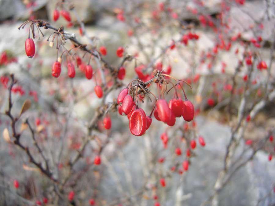 Good Winter Garden Design: Plants For A Four Season Landscape   Green Homes    Natural Home U0026 Garden