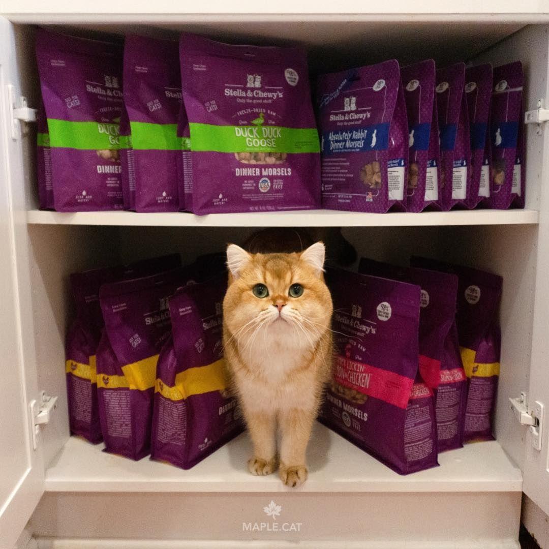 Stella Chewy S Always Sparks Joy Mariekondo Image Via Ig Maple Cat Kitten Food Chewy Food Animals