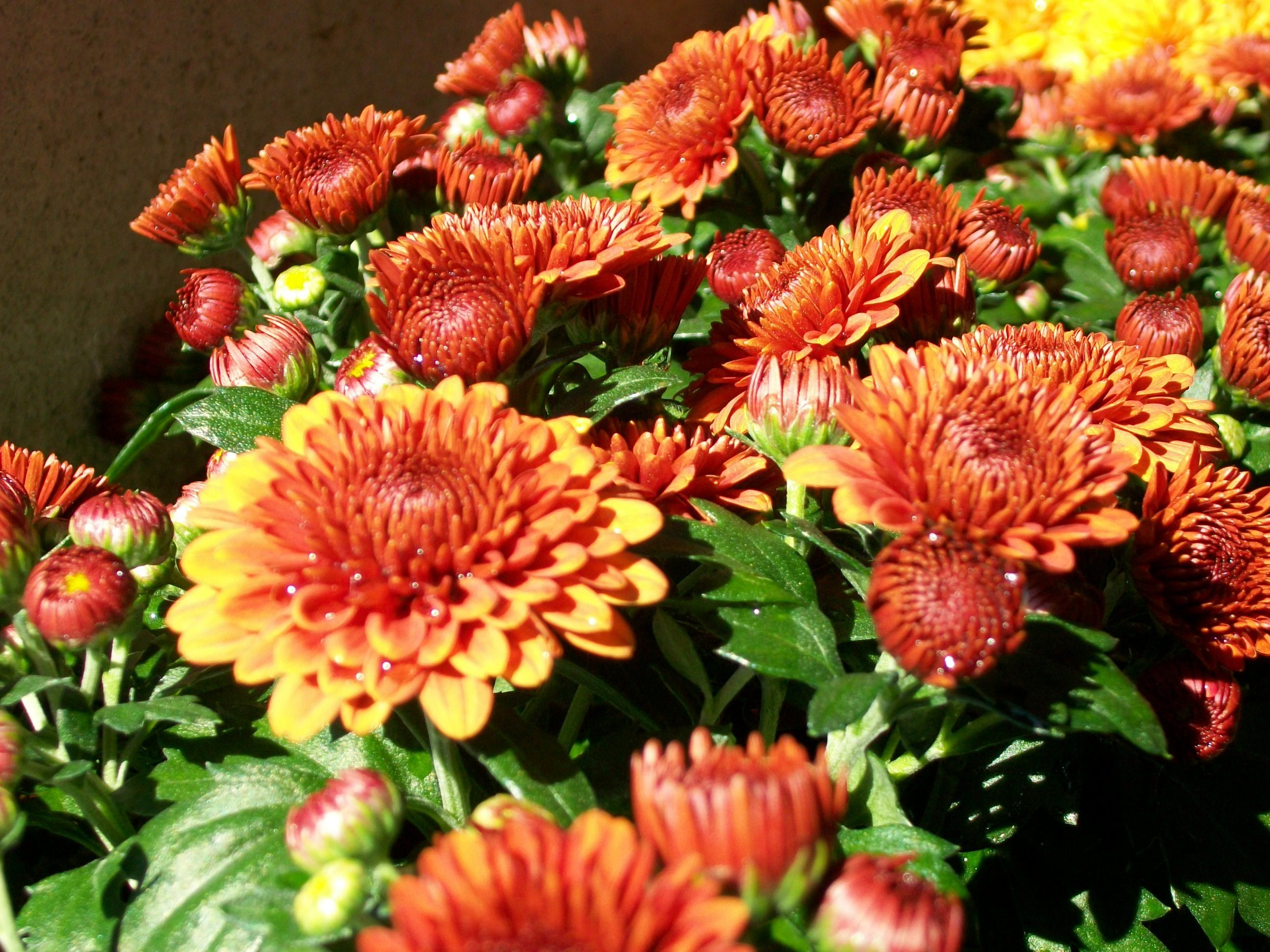 Beautiful orange and gold colored flowers. | D & G Egyptian ...