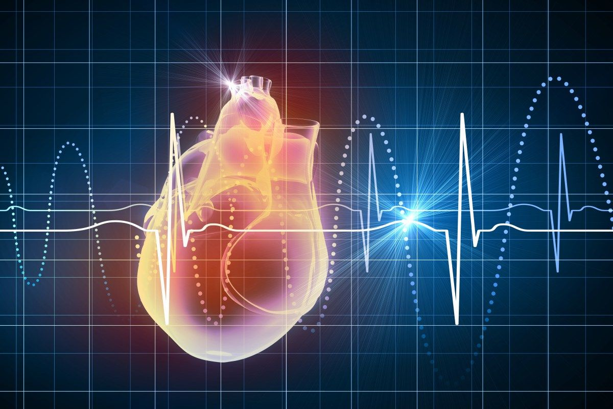 Pin de Izabella Marques Lira en Anatomia Cardiaca | Pinterest ...