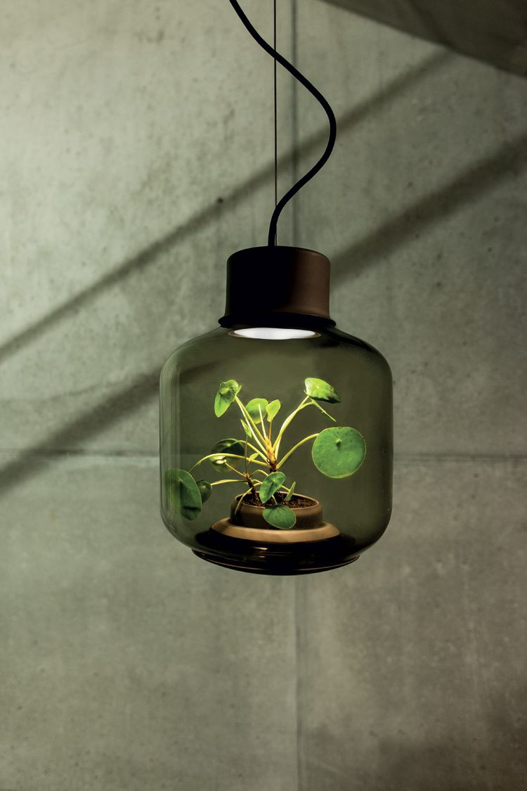 Nui Studio has conceived a lamp to allow plants to grow in windowless places.