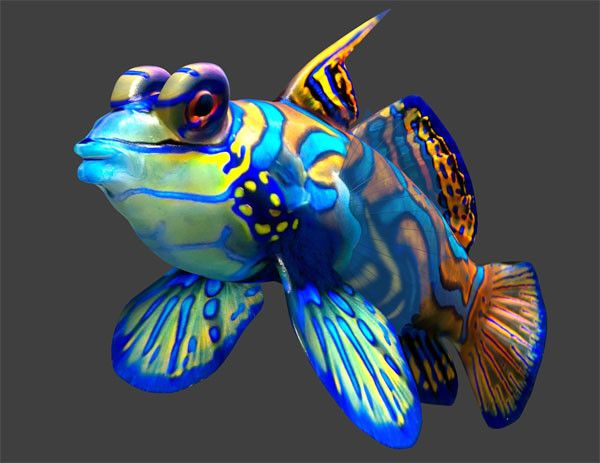 Image Gallery Most Beautiful Tropical Fish