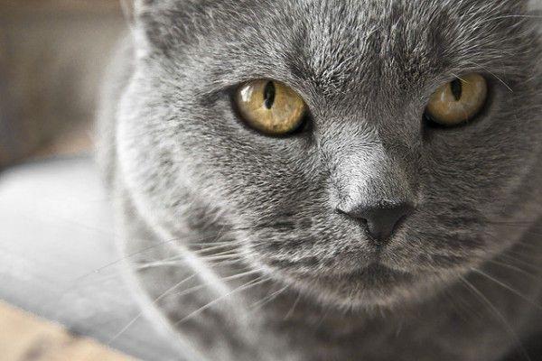 ¿Tu gato tiene una edad avanzada? Entonces debes vigilar mucho su alimentación. Toma nota.