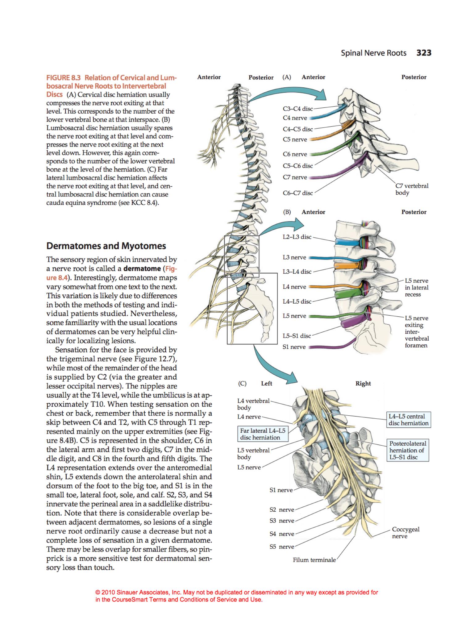 Pin By Jessica Eaton On Neurosurgery Pinterest