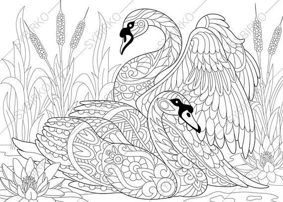 Swan Birds. Adult Coloring Book Page. Zentangle Doodle Coloring Pages for Adults. Digital illustration. Instant Download Print.