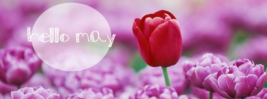 Image result for hello may facebook cover