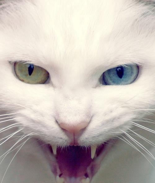 Epingle Par Cindy Kinsey Sur Cats Fond D Ecran Chat Chats Adorables Chatons Droles