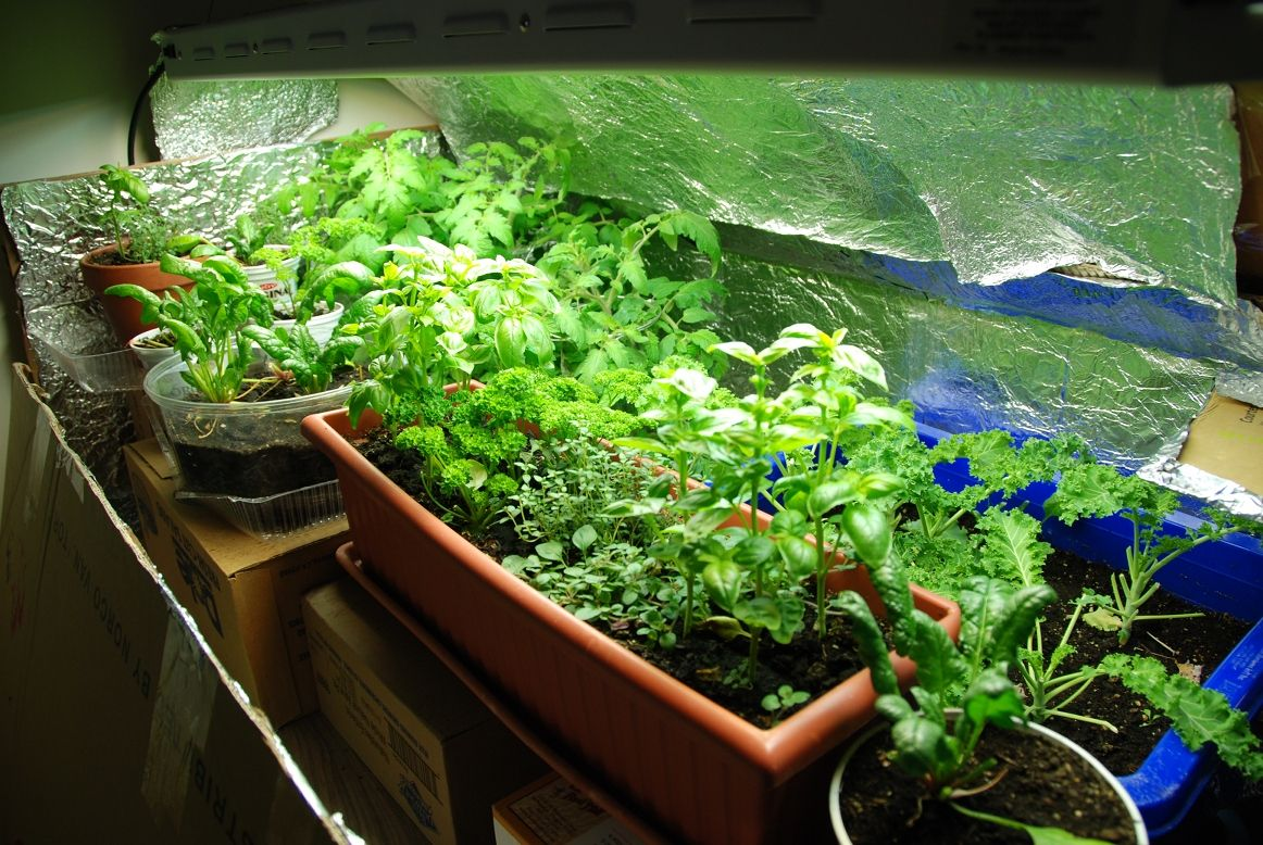 http://canmorelocavore.wordpress.com/tag/indoor-agriculture ...