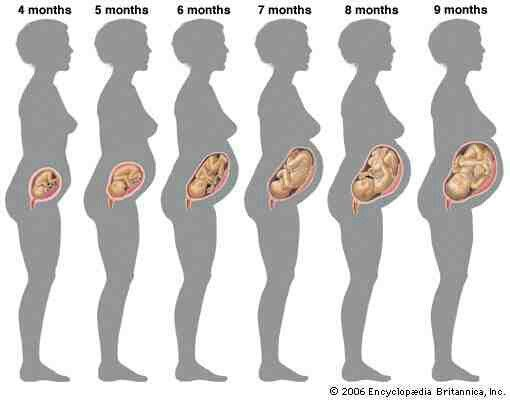 Growth Pregnancy And Motherhood Pinterest Pregnancy Baby And