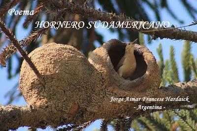 """""""""""  MIS   PENSAMIENTOS  """""""": HORNERO SUDAMERICANO"""