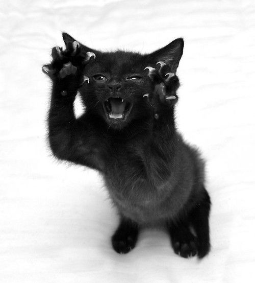 Photo of Samsara Chaos – Gatos – #Chaos #Gatos #Samsara