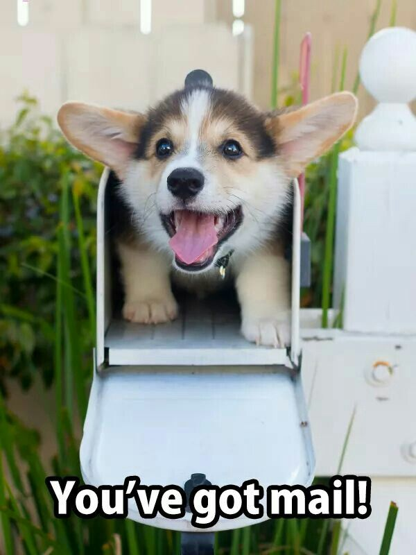Here's the mail, it never fails, it makes me wanna wag my tail...