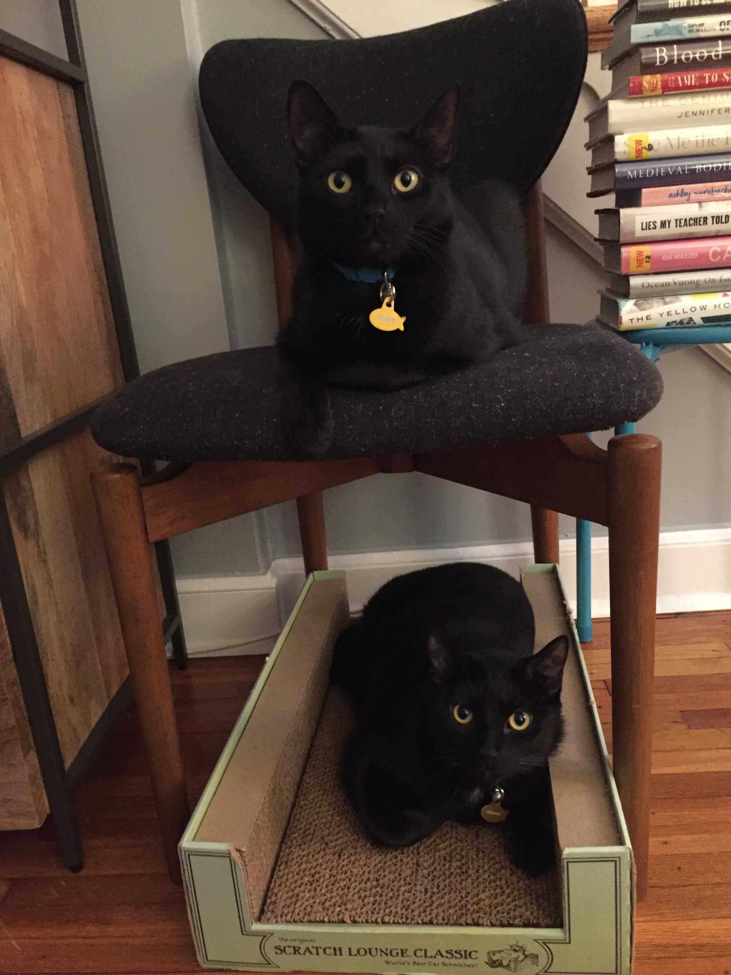 Double decker cat loaves Cats, Crazy cats, Cute little