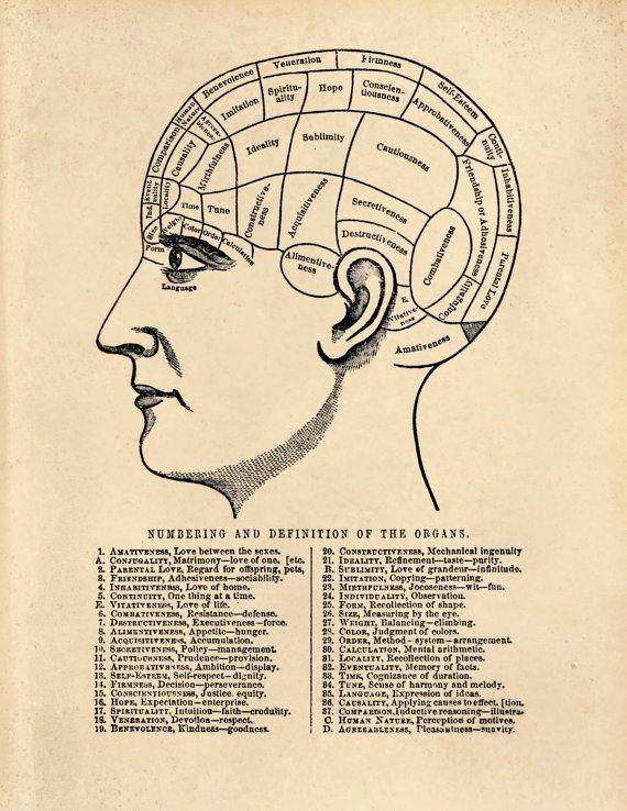 Psychology Head Diagram Wiring Diagram