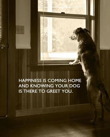 Happiness Is Coming Home And Knowing Your Dog Is There To Greet You Baby Dogs Dogs Dog Quotes