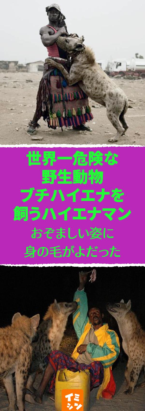 世界一危険な野生動物ブチハイエナを飼うハイエナマン ハイエナ ハイエナマン エチオピア ナイジェリア 野生動物 危険 動物の骨をも軽く砕いてしまう強力なアゴをもつことなどから 世界で最も危険な生物 の内に数えられるブチハイエナ そんなブチハイエナ