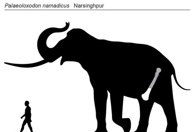 An Ancient Elephant May Have Been Biggest Land Mammal Ever | Mental Floss