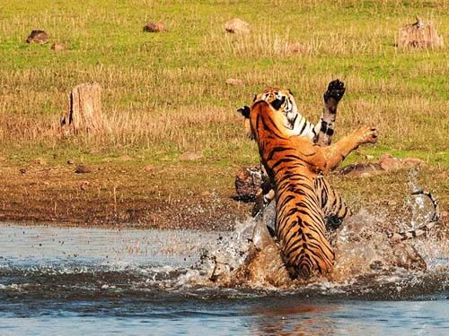 Welcome to thekkady - Our Periyar Tiger Trail is an ...