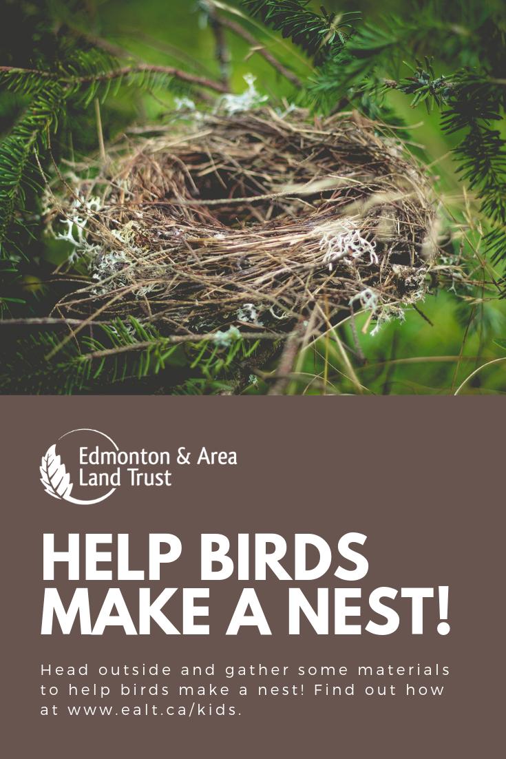 Bird Nest Making Edmonton Area Land Trust Conservation Activities Outdoor Activities For Kids Nature Blogs