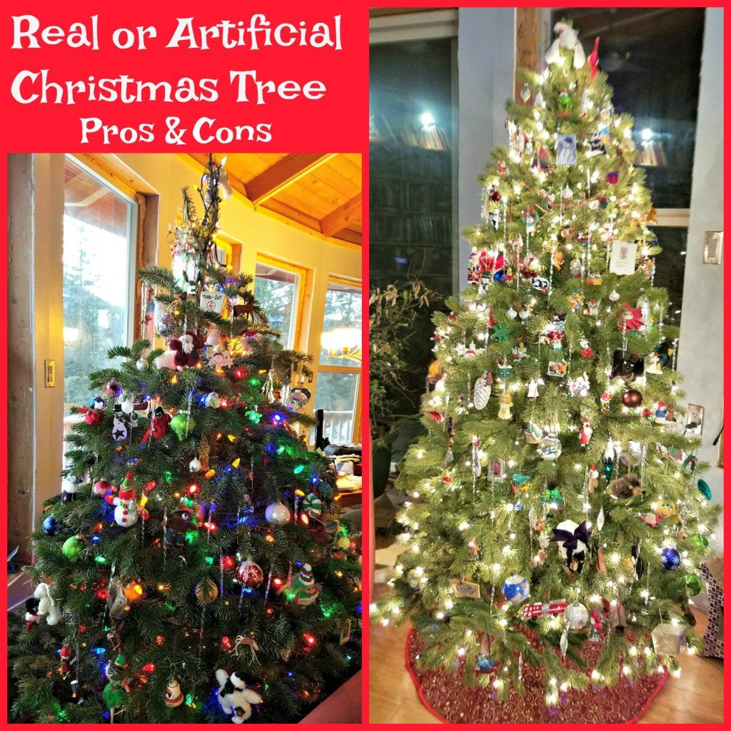 Artificial Or Real Christmas Tree Pros And Cons Real Christmas Tree Christmas Tree Real Christmas