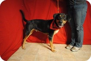 Weatherford Tx Hound Unknown Type Doberman Pinscher Mix Meet