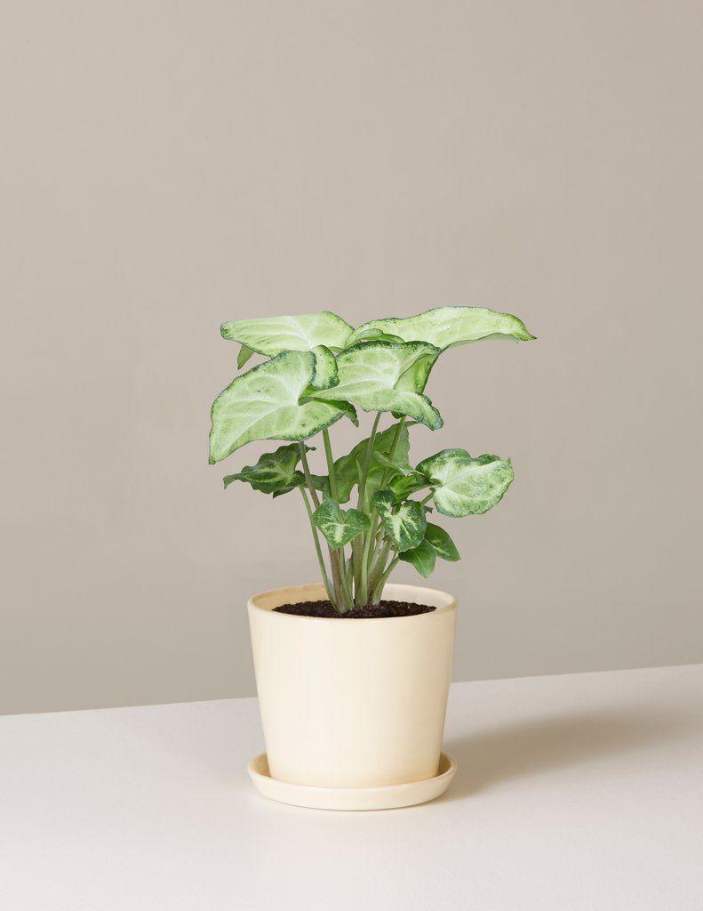 Low-Light-Indoor-Plants