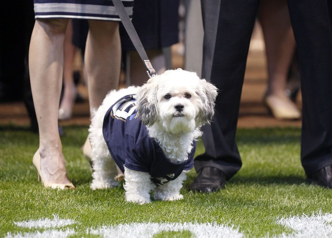Photos Hank The Dog On Brewers Opening Day Brewers Opening Day