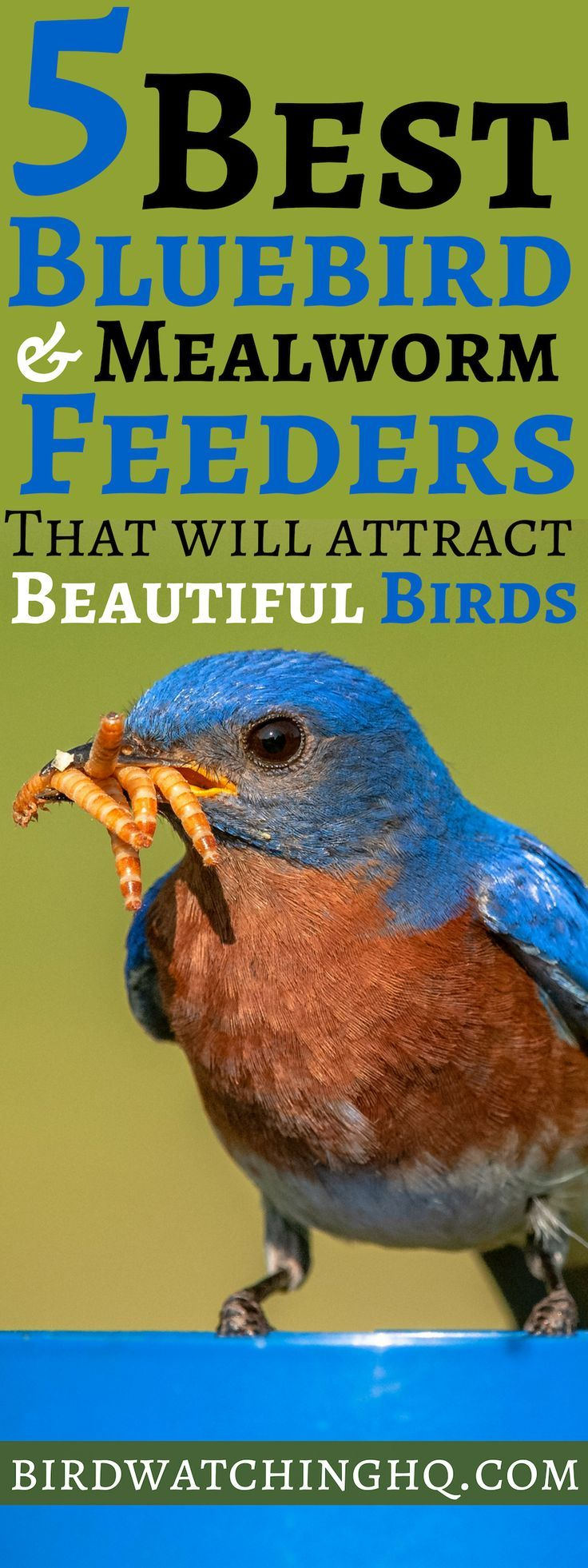 The 5 BEST Bluebird & Mealworm Feeders To Try (2020 Best