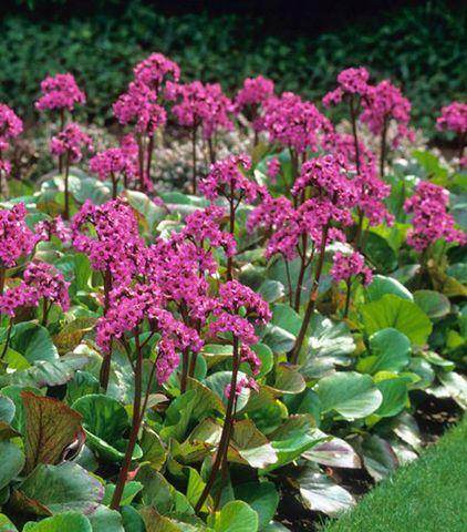 Vaste Planten Voor In De Tuin.Onderhoudsarme Vaste Planten Voor Je Tuin Vaste Planten En