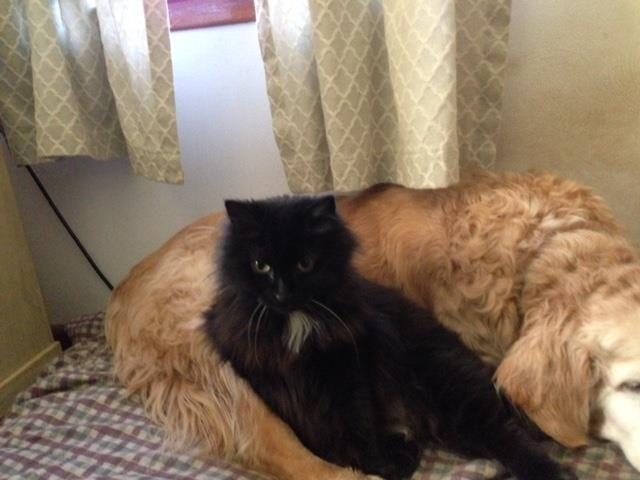 Lost Cat Butler Street Area Of Torrington Animal Control Lost Cat Animal Control Animals