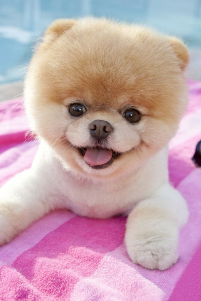 Dog Worlds Mobile Wallpaper Mobiles Wall Adorable Dogs Dogs