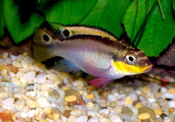Avail Terrarium Supplies And Reptile Accessories From Our Online Shop Cichlids Fish Aquarium Fish