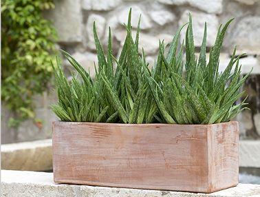 Des Jardinieres Balcon Et Terrasse A Prix Doux Plants Herbs Garden