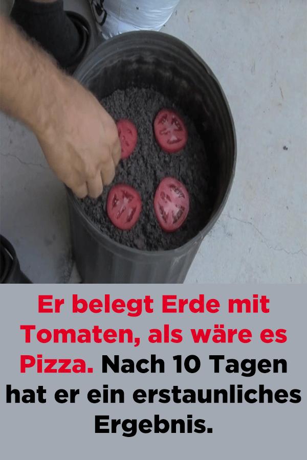 Er belegt Erde mit Tomaten, als wäre es Pizza. Nach 10 Tagen hat er ein erstaunliches Ergebnis. #tomatenzüchten