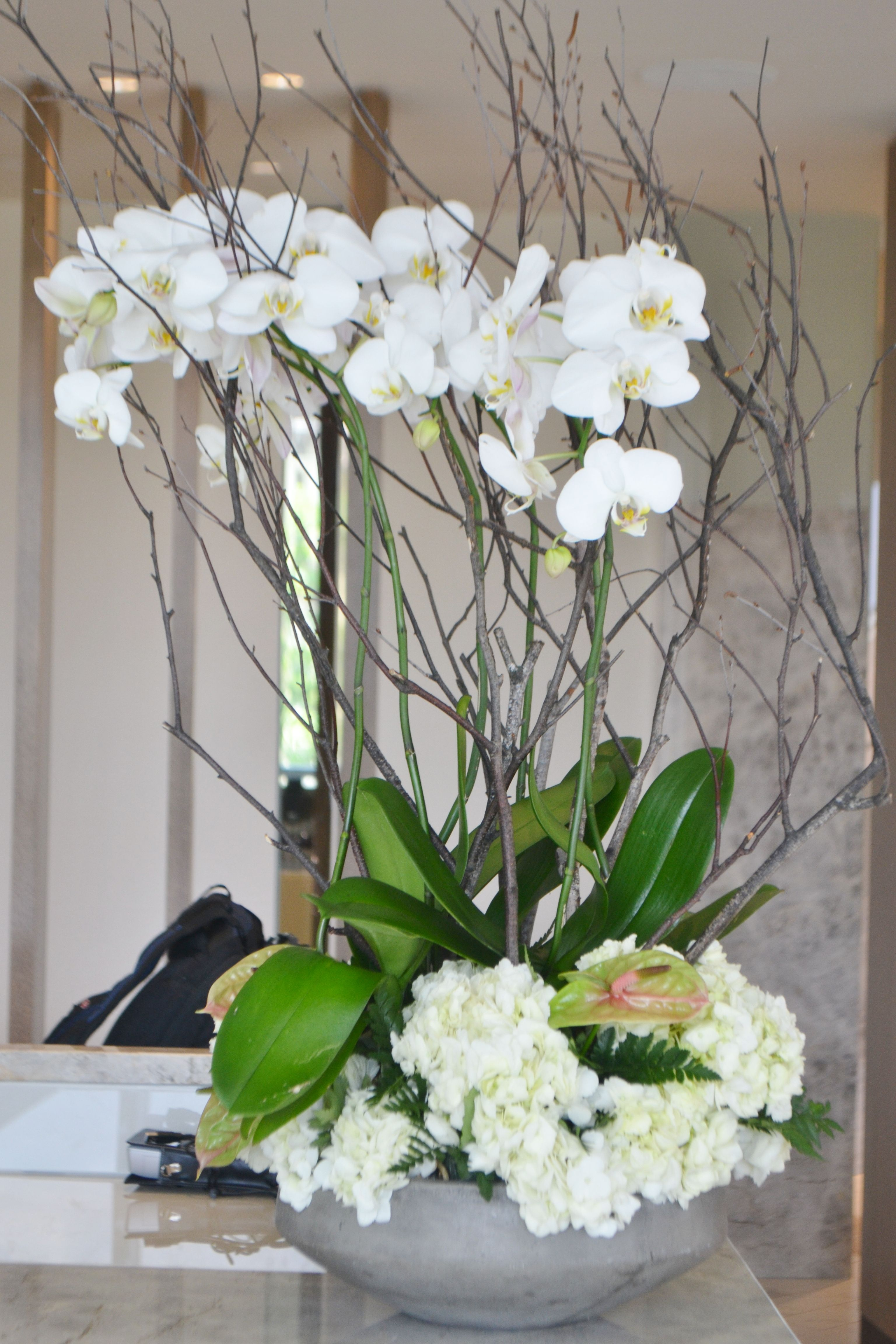 Phalaenopsis Orchid Plants Design For Lobby Flower Delivery Fresh Flower Delivery Plant Design