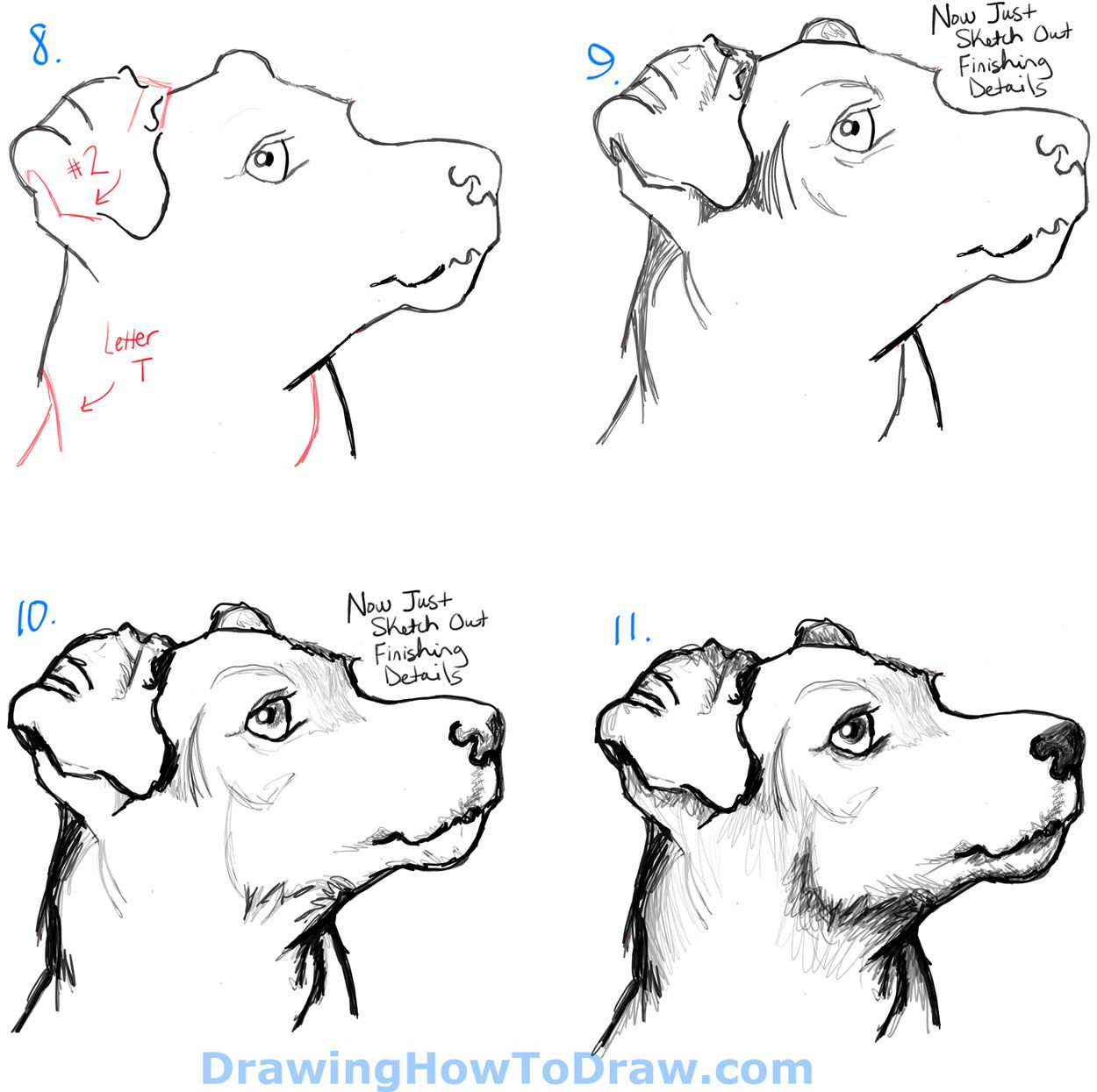 How To Draw A Terrier S Face Dog S Face With Easy Steps How To Draw Step By Step Drawing Tutorials Dog Face Drawing Dog Drawing Simple Dog Drawing