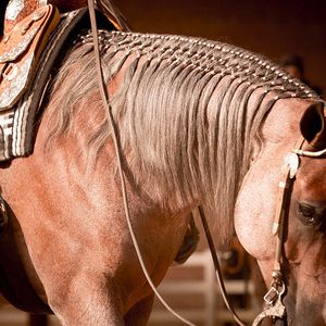In recent years, the horse show industry has been witness to a growing trend. Long, flowing manes have become a common sight, and not just in the western pleasure and ranch riding arenas. Events as traditional as showmanship and equitation have experienced an increasing number of horses showing with long manes. For years, the industry …