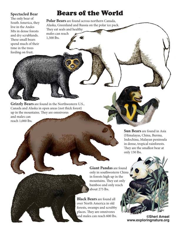 Learn About Animals On Exploringnature Org Animal Report Animals Bear