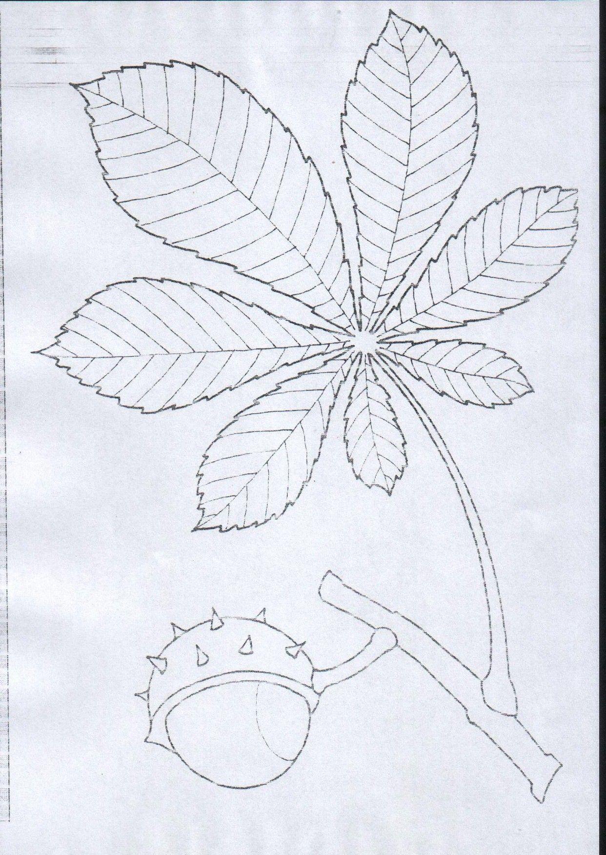 Lisc Kasztanowca Jpg 1242 1752 Nature Kids Autumn Activities For Kids Autumn Activities