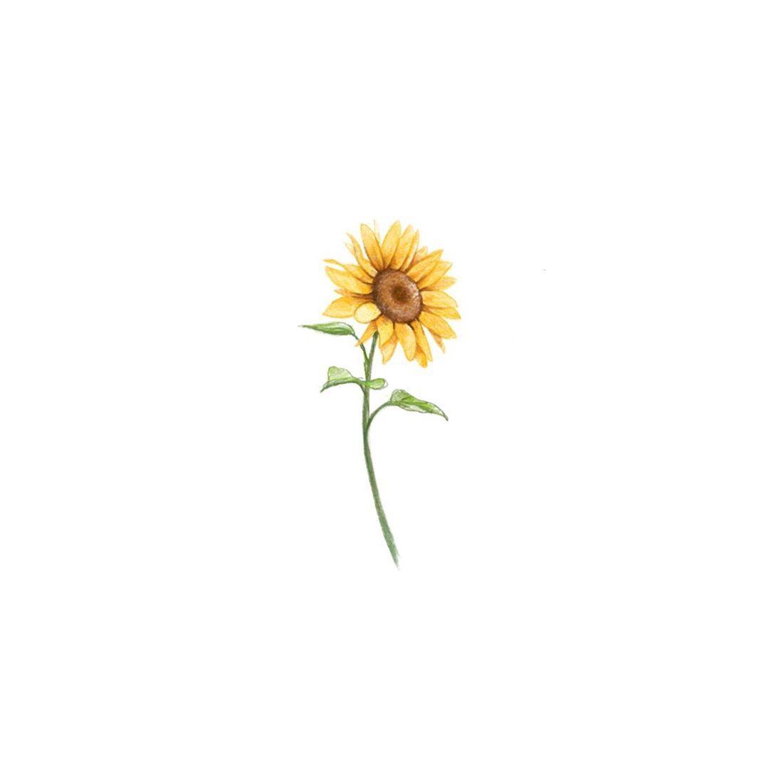 "Photo of STUDIOBYSOL_eunyu on Instagram: ""Sunflower . . . . . . . . . . . . . . . . . #tattoo #tattoodesign #flower #flowertattoo #sunflower #sunflowertattoo #eunyutattoo…"""