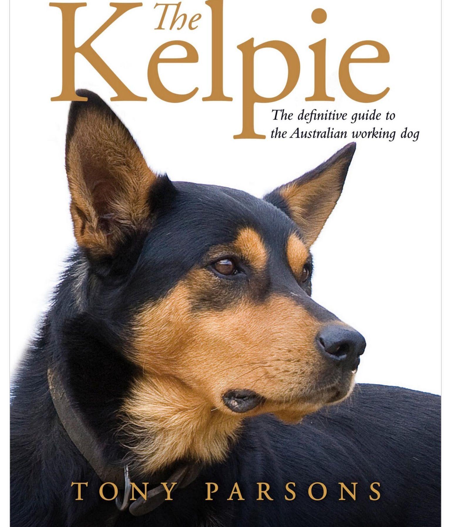 Australian Kelpie   Australian kelpie dog, Dog training