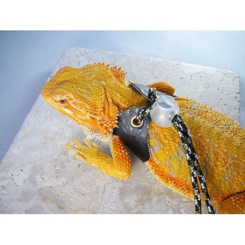 Lizard Harness & Leash - Adult Size fits Most Adult Bearded Dragons