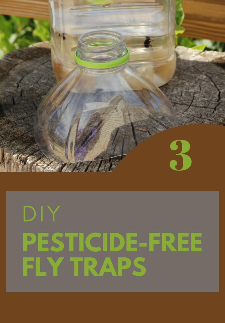 3 DIY PesticideFree Fly Traps diy pesticide