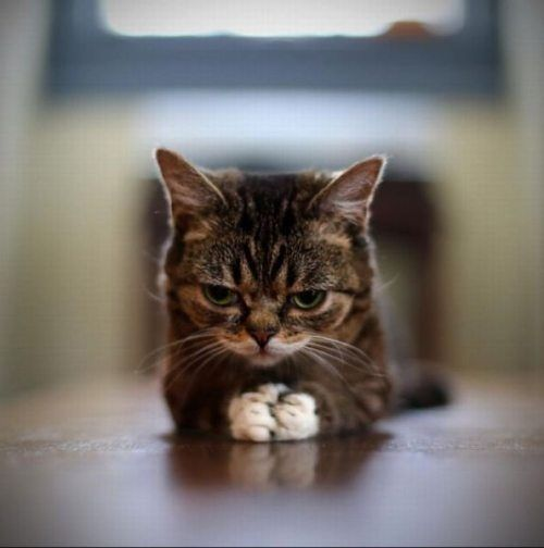 Looks like this kitty thinking of World Domination! LOL!