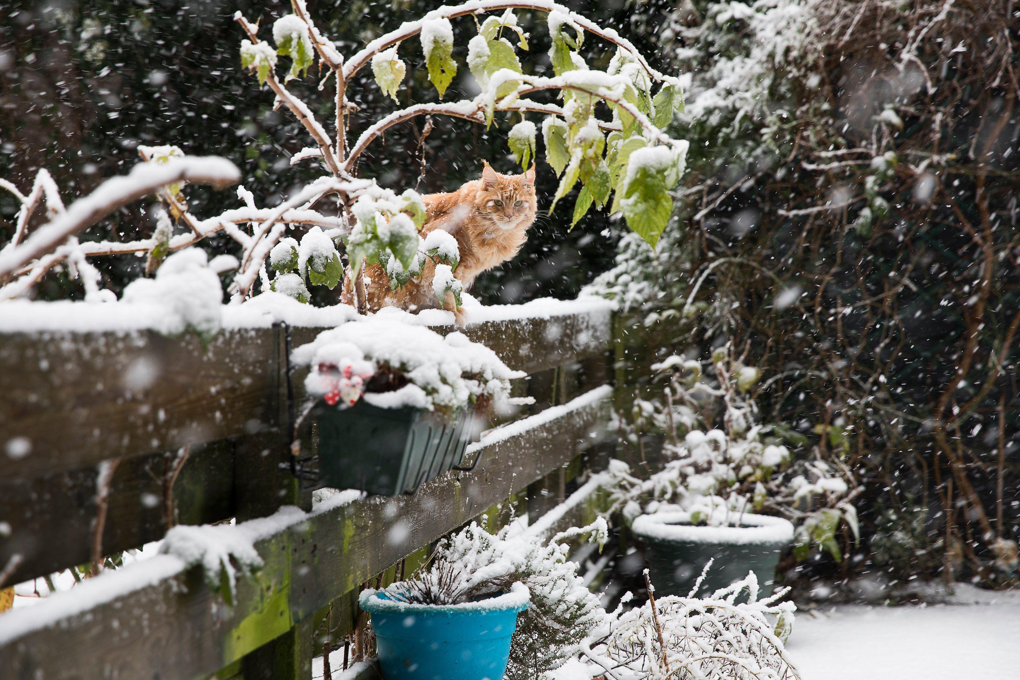 Nicht Nur Fur Miezen Gibt S Im Winterlichen Garten Etwas Zu Entdecken Garten Gartenarbeit Garten Hochbeet