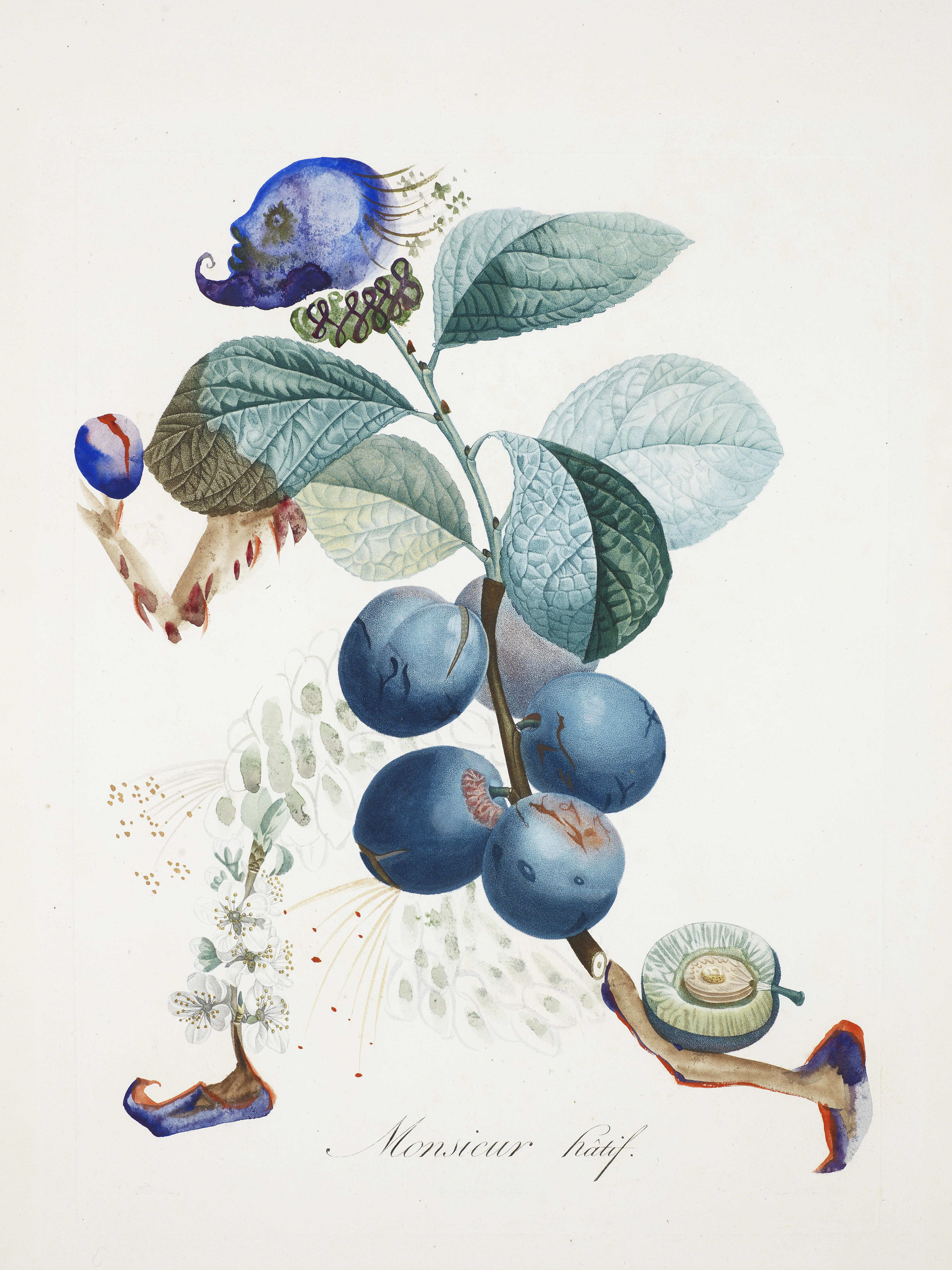 Prunier hâtif - Hasty plum Botanical drawing by Salvador Dali. He is ...