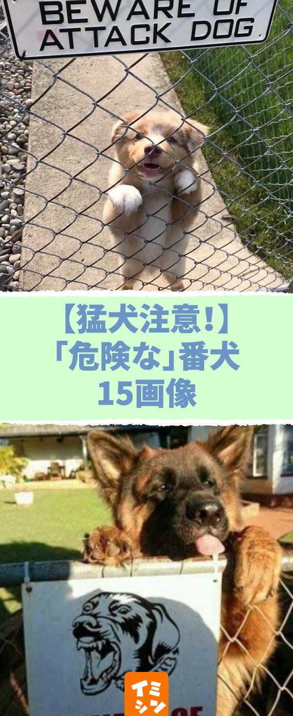 猛犬注意 危険な 番犬15画像 番犬注意 のはずが 危険とは程遠いフレドリーすぎる犬画像 Pinterest Hash Tags Max 8 犬 画像 番犬 注意 危険 フレンドリー 猛犬注意 ペット 犬 犬 画像