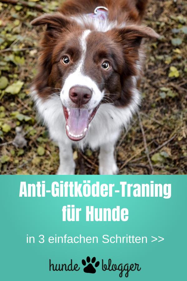 Anti Giftkoder Training Fur Hunde In 3 Schritten In 2020 Hunde Gesunde Hunde Hunde Welpen