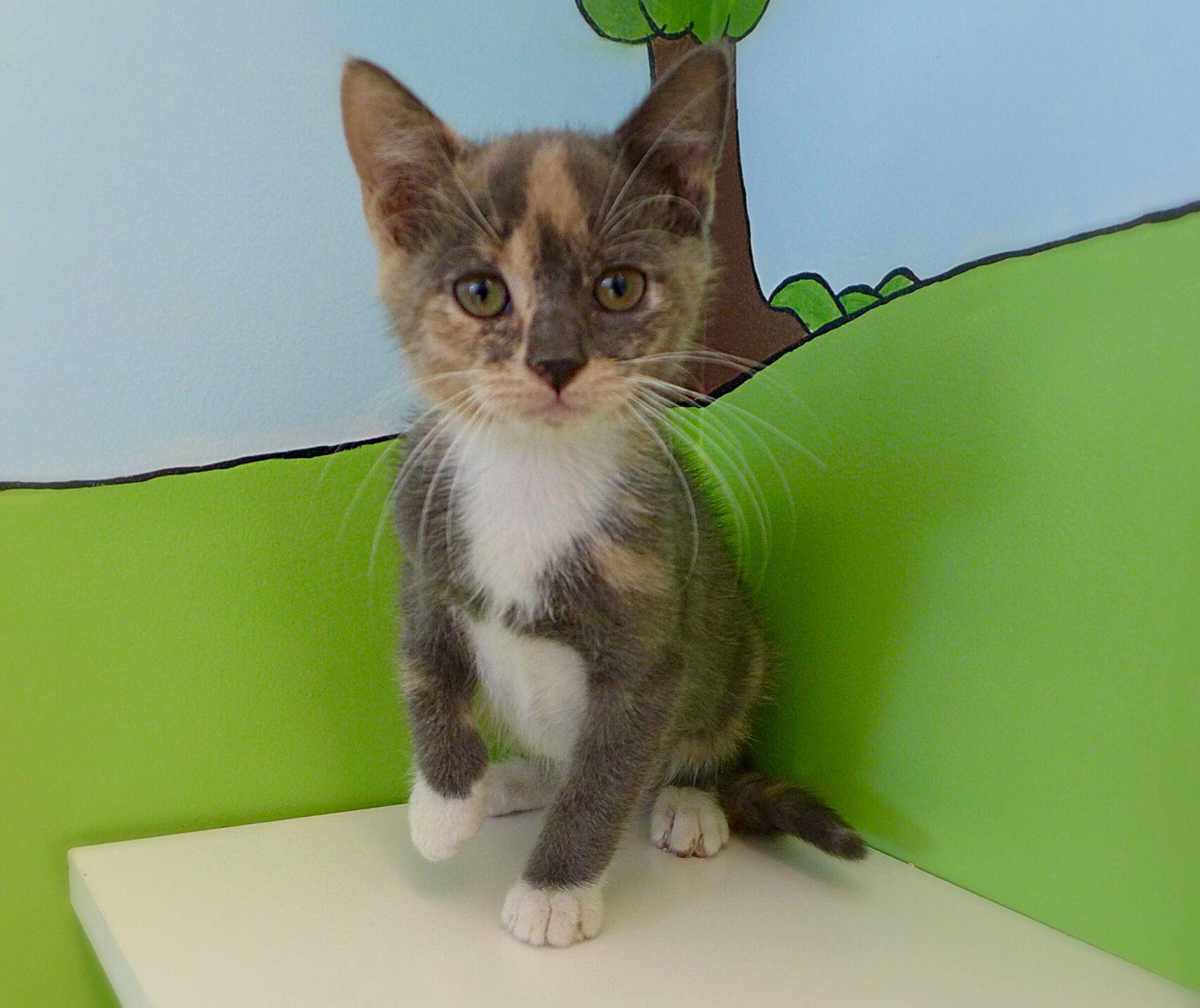 Adorable kittens ready for adoption! Kitten adoption